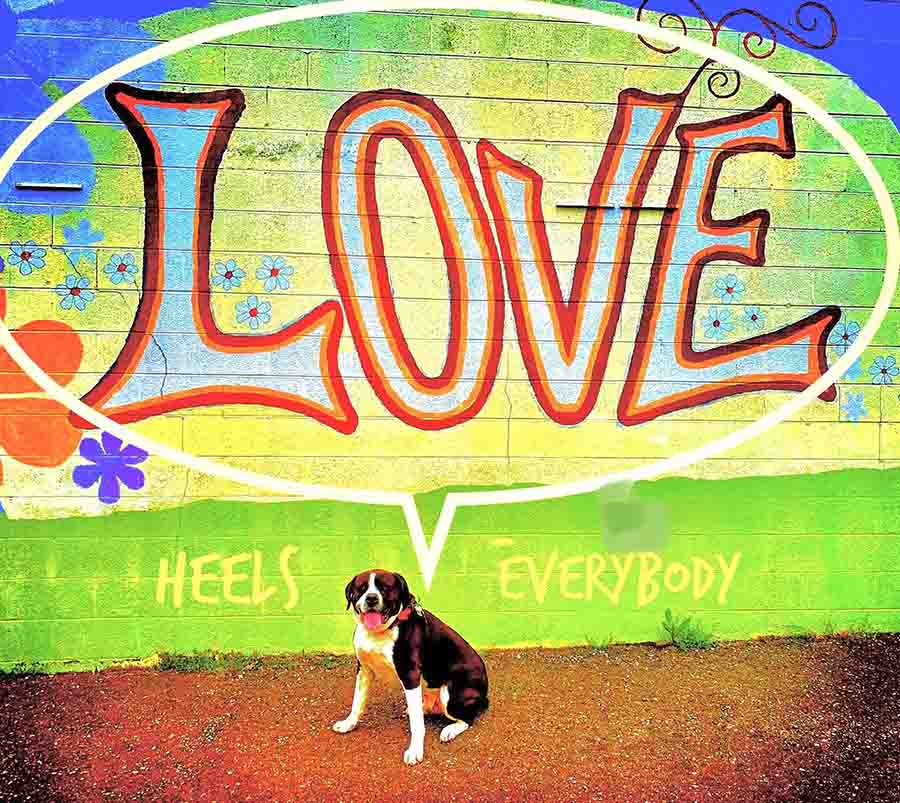 Dog in front of a colourful wall